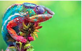 Leadership, Chameleon Style