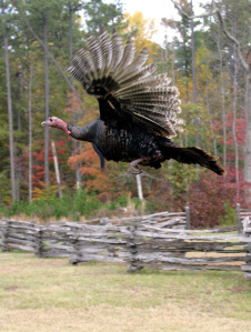The Flying Turkey Thanksgiving